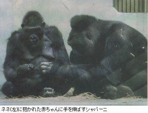 Gorira1