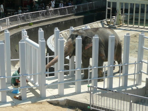 Zoo130716a